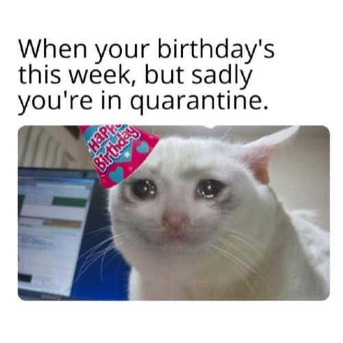 Funniest Quarantine Memes