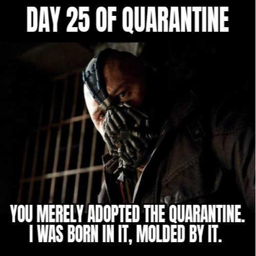 Quarantine pictures funny