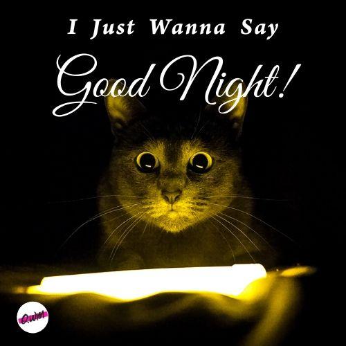i just wanna say good night