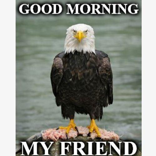 Good Morning Memes for Friends