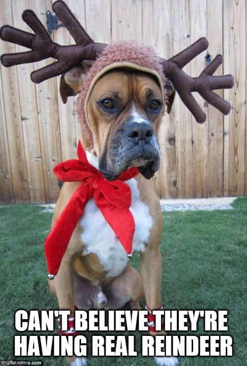 Merry Christmas dog Memes