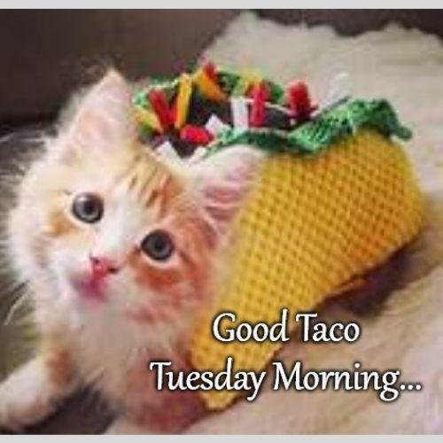 Good Morning Tuesday Memes
