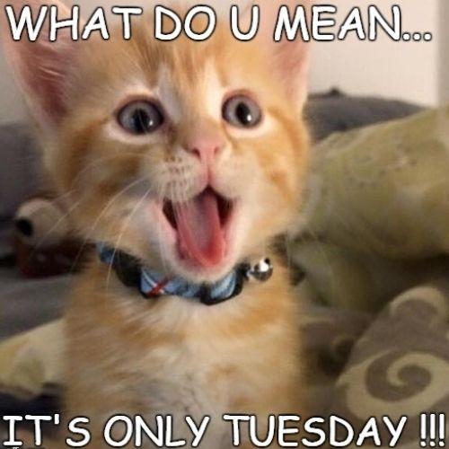 Tuesday Memes