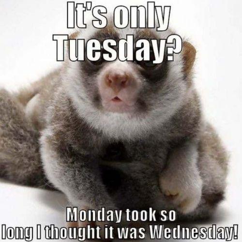 Positive Tuesday Memes