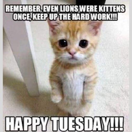 Titty Tuesday Memes